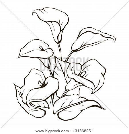 White calla lilies on a white background circuit