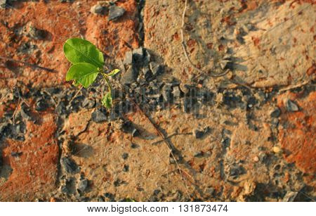 A plant growing from a brick wall,