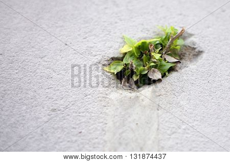 A plant growing from a cement block wall