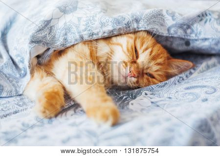 Cute ginger cat lying in bed under a blanket. Fluffy pet comfortably settled to sleep. Cozy home background with funny pet. poster