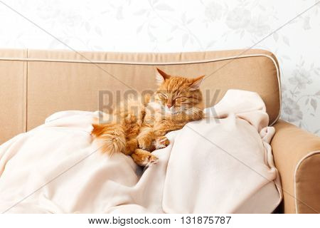 Cute ginger cat lying on a beige couch. Fluffy pet comfortably settled to sleep. Cozy home background with funny pet. poster