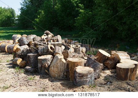 Saw cut trunks of the pine tree. Firewood. Deforestation and firewood. Rural look. The village and the woodpile of fire wood.