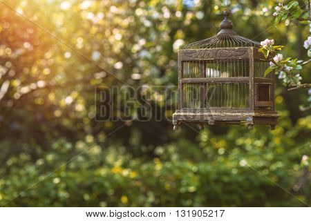 Antique Edwardian birdcage in spring blossom