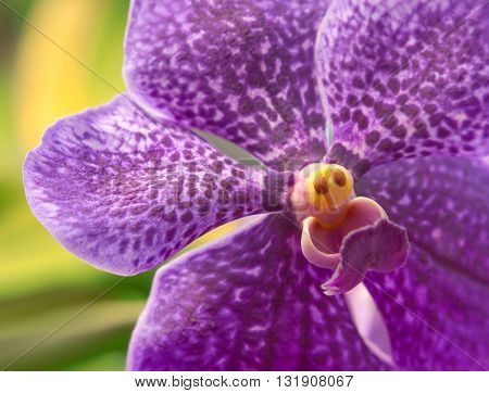 Beautiful purple orchid