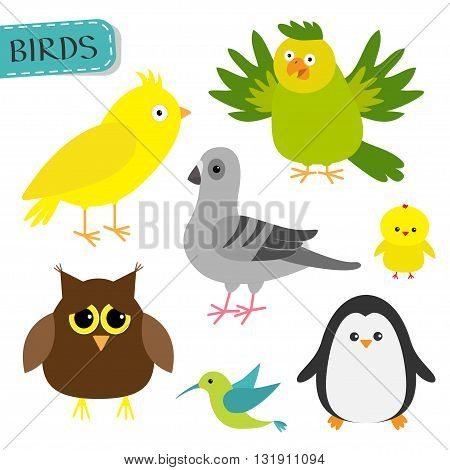 Bird set. Colibri canary parrot dove pigeon owl chiken penguin. Cute cartoon characters icon. Baby animal zoo collection. Isolated White background Flat design Vector illustration