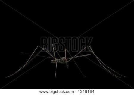 a mosquito close-up isolated on a black background. poster