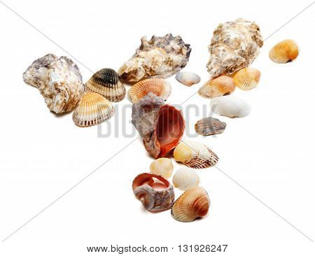 Seashells isolated on white background. Close-up view