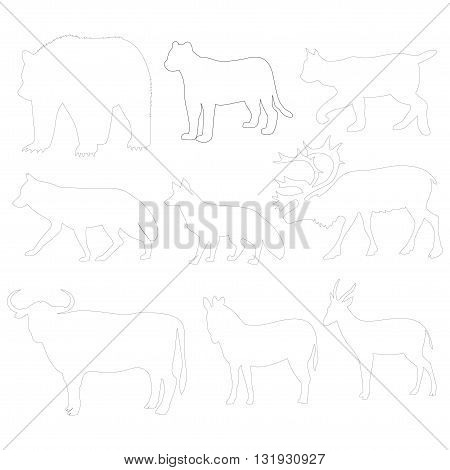 forest animals images on white background vector illustration