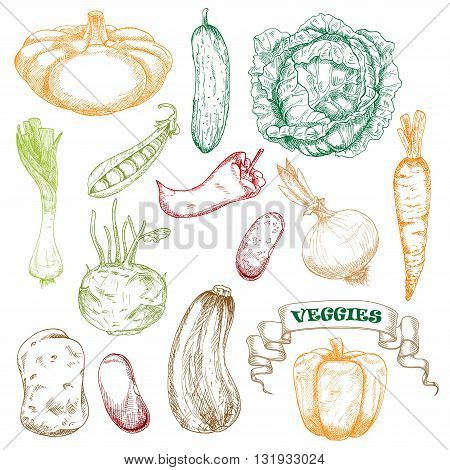 Wholesome fresh orange carrot and bell pepper, green juicy cabbage and cucumber, sweet pea, kohlrabi and leek, ripe beans and potato, zucchini and patty pan squash, hot chili pepper and onion vegetables sketches
