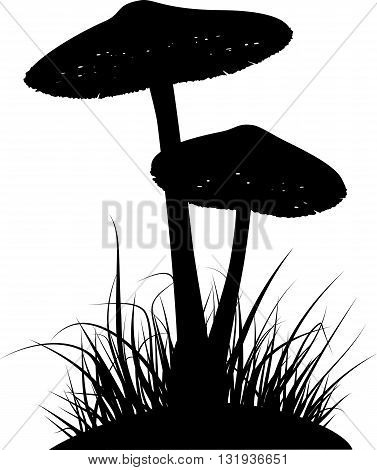Silhouettes of two poisonous mushrooms in the grass