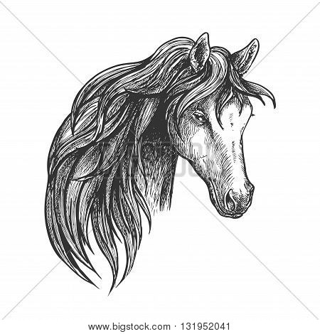 Stately mare of american quarter breed sketch portrait with half turn view of pretty horse. May be used as equestrian club symbol or horse breeding theme design