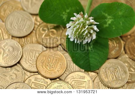 green clover leaf and flower on many golden coins