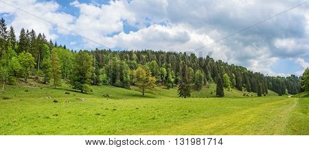 Forest panorama with meadow in the foreground - Wental valley at Swabian Alps