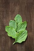 Plantain leaves on a wooden background. poster