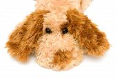toy sorrowful dog isolated on white backgroung poster