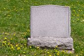 Blank headstone in cemetery on grass with dandelions poster