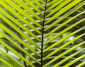 harmonic pattern of palm leaves in the jungle in Dominica poster