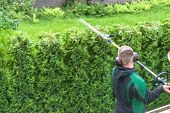 Hedge trimming works in a garden. Professional gardener with a professional garden tools at work. poster