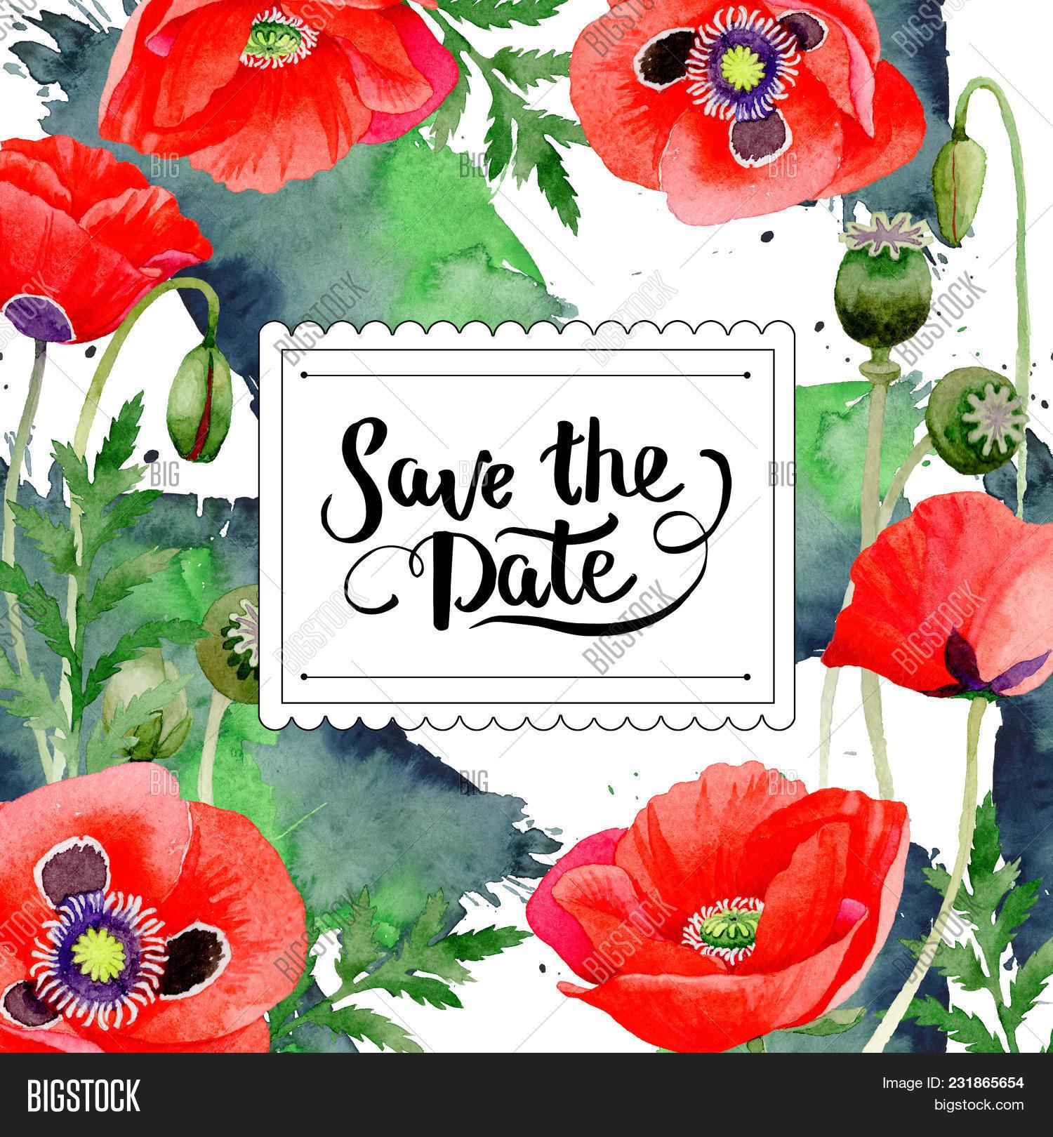 Wildflower Poppy Image Photo Free Trial Bigstock