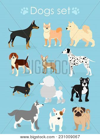Vector Illustration, Set Of Funny Purebred Dogs, On A Light Blue Background