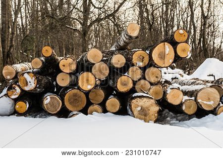 Timber, Sawn Trees Of Birch And Poplar