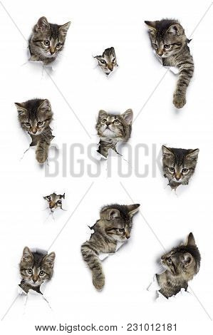 Kittens In Holes Of Paper, Little Grey Tabby Cats Peeking Out Of Torn White Background, Ten Funny Pl