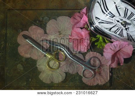Original Curved Scissors On Flower Petals Of Flowers, Right Watch With Curved White Dial, Unusual St