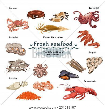 Sketch Colorful Marine Creatures Collection With Seafood Meat Using For Different Meals Cooking Isol