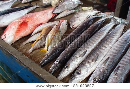 Various Fresh Large And Small Fish From The Indian Ocean On A Market Stall On The Seychelles
