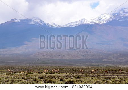 Landscape In The Altiplano Of Arequipa On The Way To The Colca Canyon In The South Of Peru