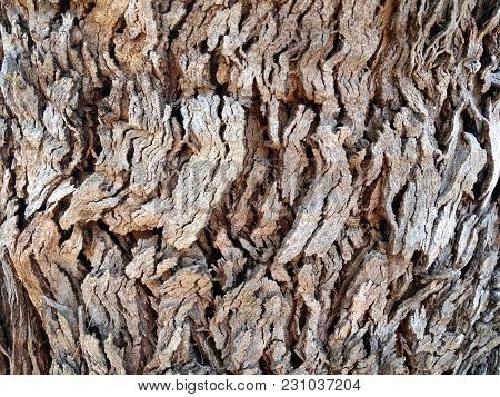 The Surface Of A Tree Showing Ridges And Grooving Of The Bark As A Background