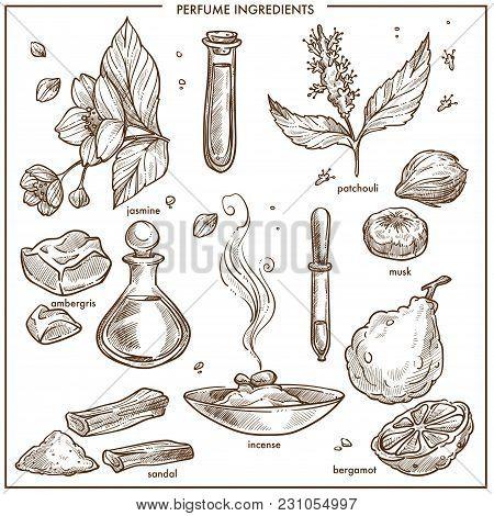 Perfume Natural Ingredients Set. Aromatic Jasmine, Fresh Patchouli, Solid Ambergris, Sandal Pieces,