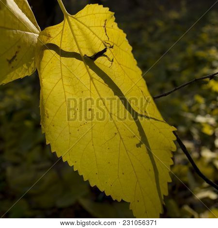 Autumn Foliage Of Forest Trees. November, The Forest.