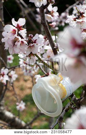 Allergy Mask On A Tree Full Of Flowers.
