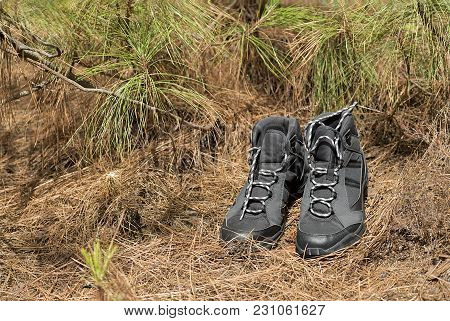 A Pair Of Hiking Boots In The Forest