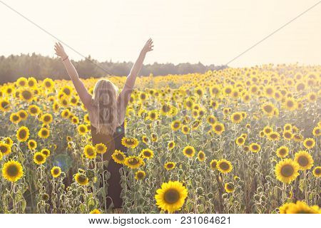 Field Of Sunflowers In Sunlight. Girl, Rear View, On The Field Of Sunflowers. Happy Young Woman Walk
