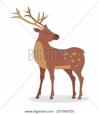 Deer Cartoon Character. Deer Male Flat Vector Isolated On White Background. North America And Eurasi
