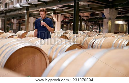 Young man wine tasting in a wine factory warehouse