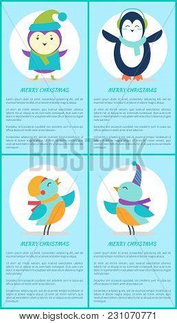 Merry Christmas, Posters Purple Bird, Cute Penguin, Singing Birds In Earphones With Scarves Vector I