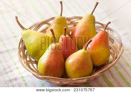 Pear Basket Pear Orchard Fresh Ripe Pears