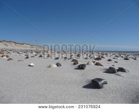 Blavand - Stones And Shellfish Conch At The Beach Of Blavand / Ho Denmark
