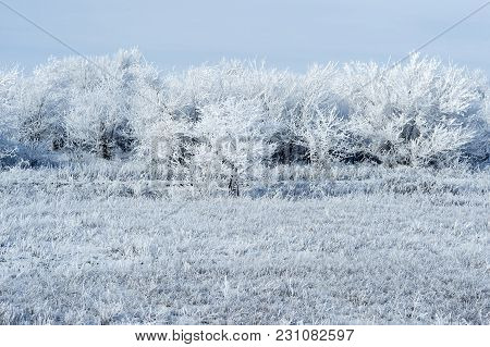 Winter Landscape With Trees And Plants, Covered With Thick Frost.