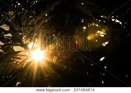 Ray Of Golden Sunlight Shines Through The Tree Branches For Background