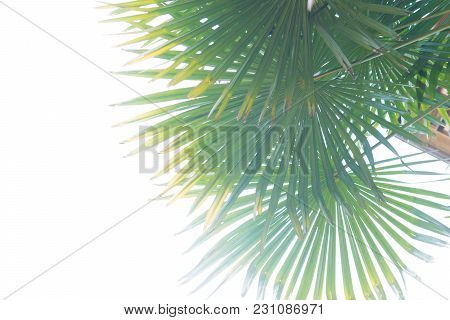 Tropical Summertime Background Of Palm Tree Leaves
