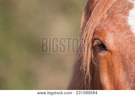 Chestnut Horse Eye In Close-up. Equine Poster Image With Copy Space. Red Brown Or Ginger Comb-over M