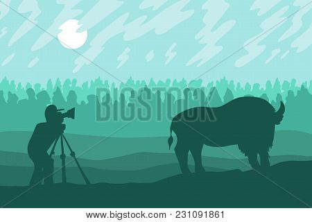 Photographer Photographs Bison In The Forest Reserve. Vector