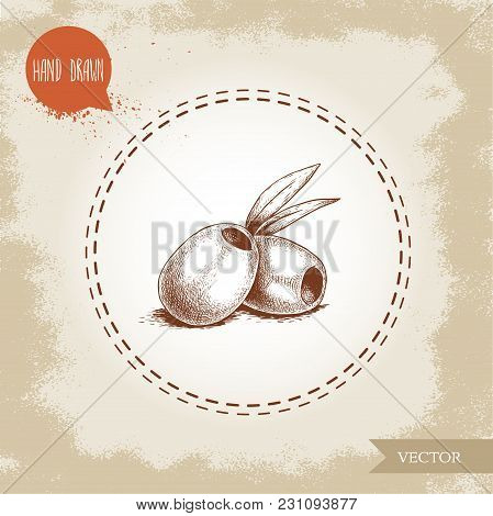 Hand Drawn Sketch Style Olives Without Seed. Olive Oil And Healthy Food Vector Illustration On Vinta