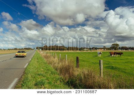 Cows Grazing On Grassy Green Field Near The Asphalt Country Road In Normandy, France. Countryside La