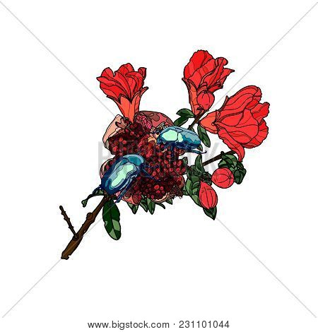 Blue Scarab Beetles On Pomegranate Branch With Flowers And Fruits. Vector Illustration.