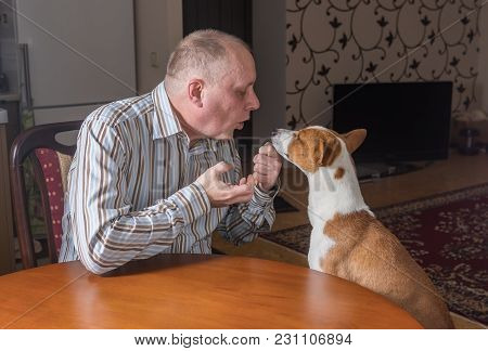 Nervous Man Having Rough Conversation With Patient Basenji Dog While Sitting Both At The Table